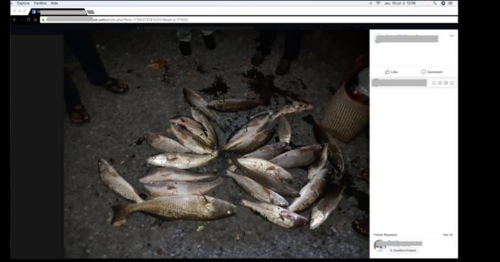 [Photos] Sea Users Association confirme des ombrines échappées de la Ferme Marine de Mahébourg