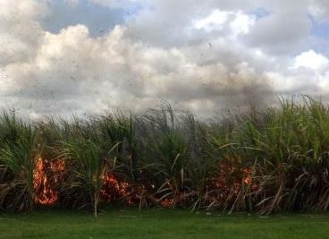 [Dossier] Incendies en série  : feux de végétation volontaires ?