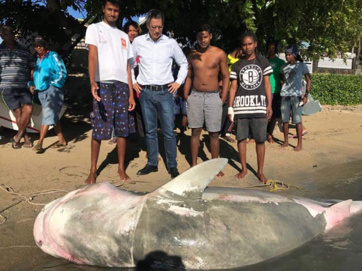 [Vidéo] Requin à Grand Gaube dans le JT télé de Zinfos974 de ce midi