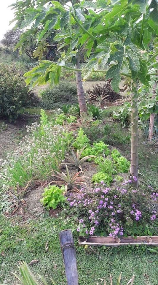 [Gael Soupe] Autour du potager bio et de la permaculture