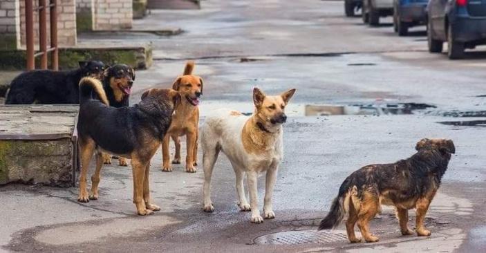 Des législations plus strictes annoncées concernant les chiens errants