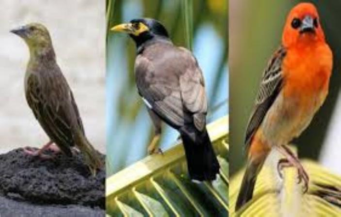 L'application gratuite «Birds of Mauritius» est disponible !