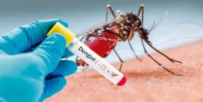 L'épidémie de dengue à Vallée-des-Prêtres prend de l'ampleur