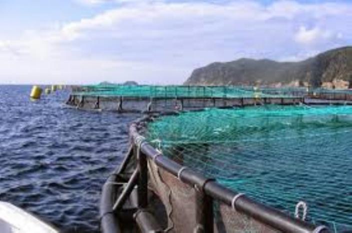 Gaspillage de l'argent public :  Rs. 12 millions pour un projet d'aquaculture qui fait plouf !