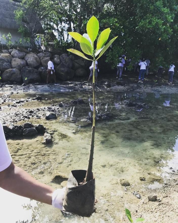 [Vidéo] Pointe d'Esny : 2 000 plants de mangroves pour donner un second souffle à l'environnement