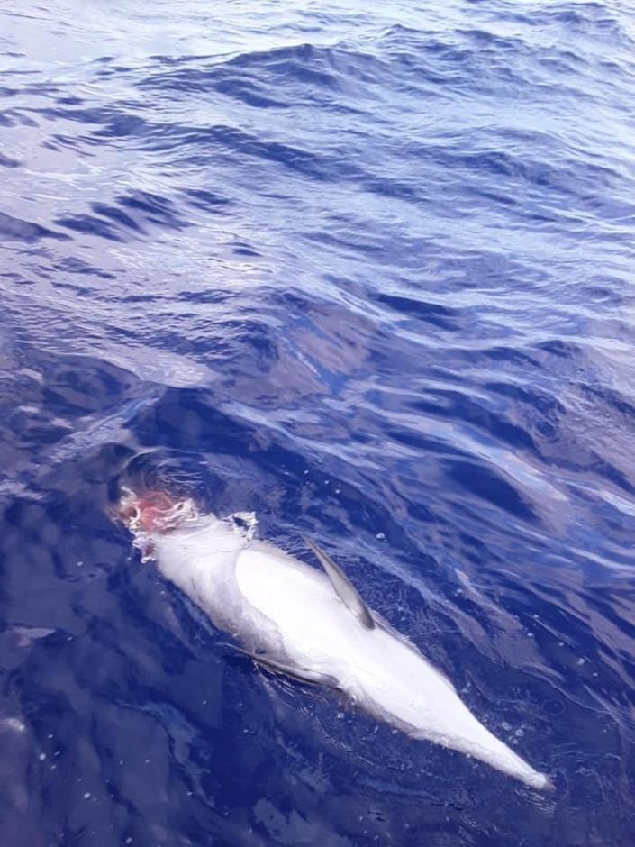 [Vidéo] Rivière-Noire : Dans une zone fréquentée par les touristes, un requin dévore un dauphin