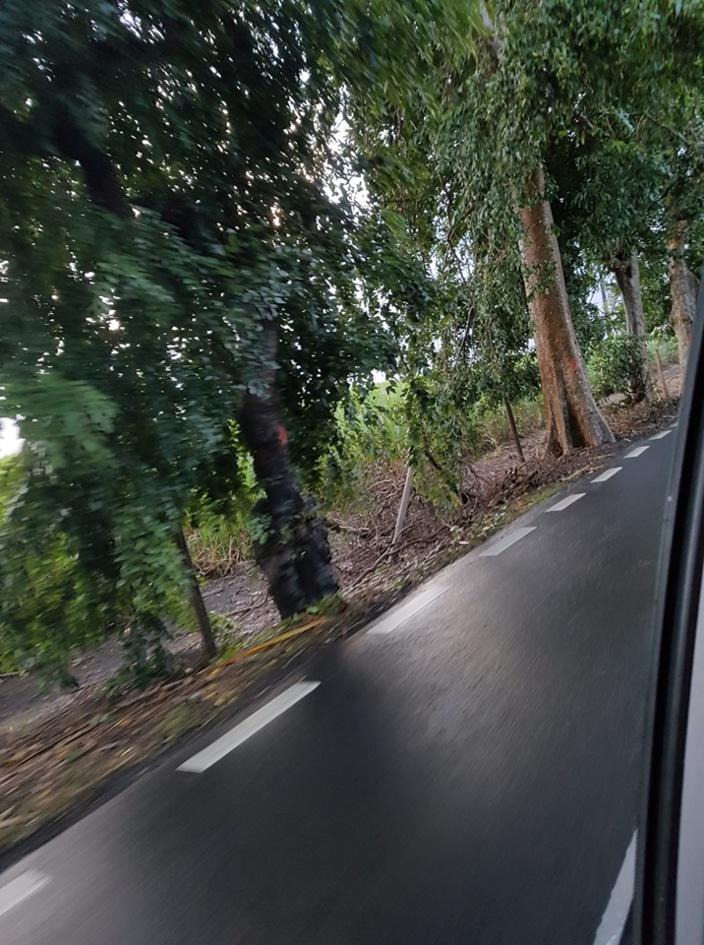 Abattage ou élagage d'arbres ? Des arbres numérotés et croix rouges à partir du rond point du Stade Anjalay