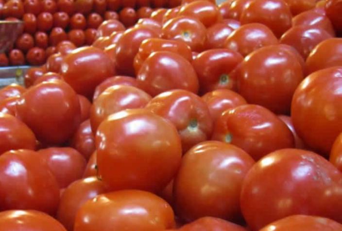"""[Agriculture] Les plantations de """"pommes d'amour"""" menacées par des insectes"""