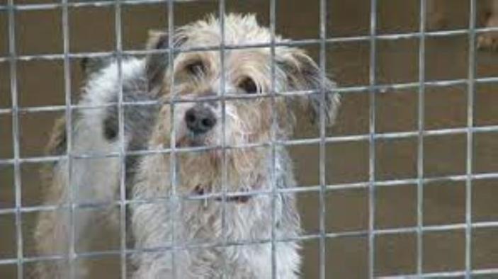 """[Législatives 2019] Sursis """"temporaire"""" des captures et l'euthanasie des chiens errants"""