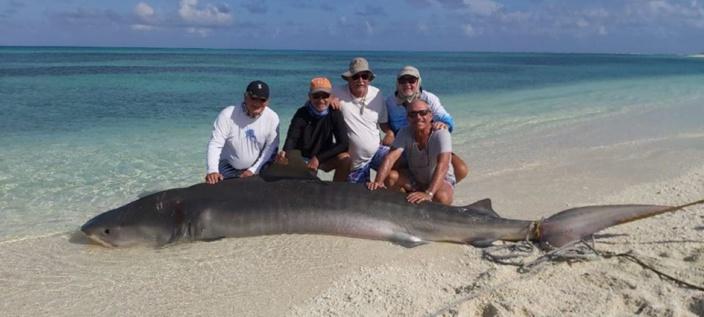 Saint Brandon : Georges le requin de la baie de l'île Tortue tué pour un selfie ?