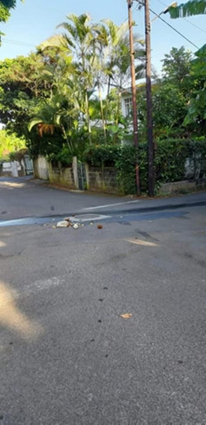 """Image insolite à Beau-Bassin/Rose-Hill : cocos, limons et clous de girofles dans la """"croisée"""""""