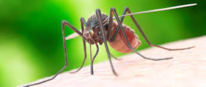 Triolet : un ressortissant indien testé positif au paludisme