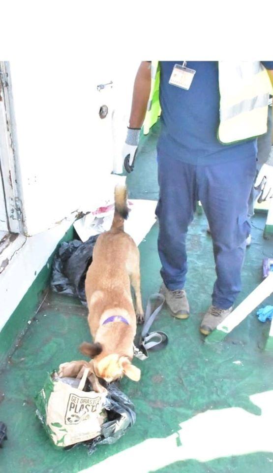 📷 Saisie de Rs 31 millions de cannabis à bord du navire LSS Success, en provenance d'Afrique du Sud