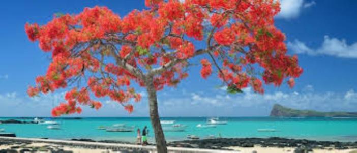 """Le 1er portail des professionnels du tourisme francophone annonce """"l'Ile Maurice bouclée jusqu'au 31 août 2020"""""""