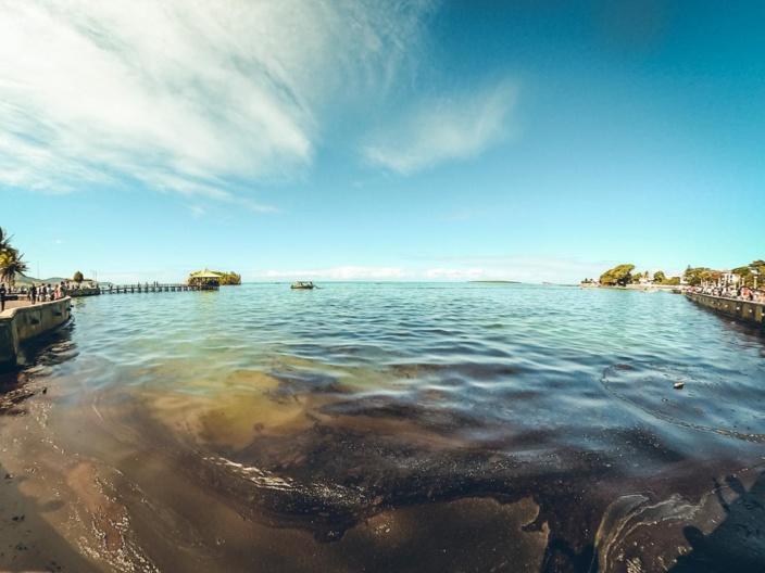 Marée noire à l'île Maurice : Eco-Sud collecte plus de Rs 6,5 millions