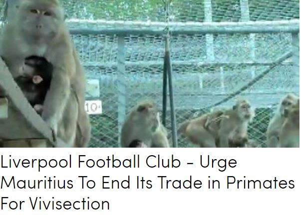 "Liverpool Football Club : Action for Primates demande au club de faire pression pour la fin du ""Monkey Business"" à Maurice"
