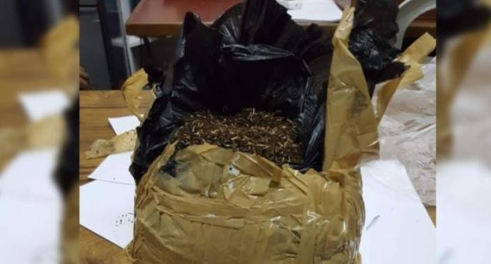 A Pereybère, saisie de Rs 2.5 millions de drogue synthétique retrouvée dans un terrain boisé