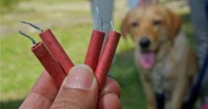 Attention aux pétards et feux d'artifices chez les animaux