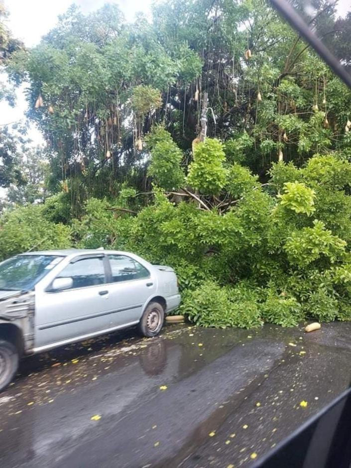 Une voiture endommagée par la chute d'un arbre à Cassis