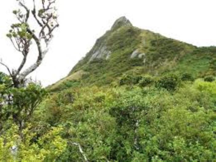 L'arbre qui pousse sur une montagne appartient à l'État