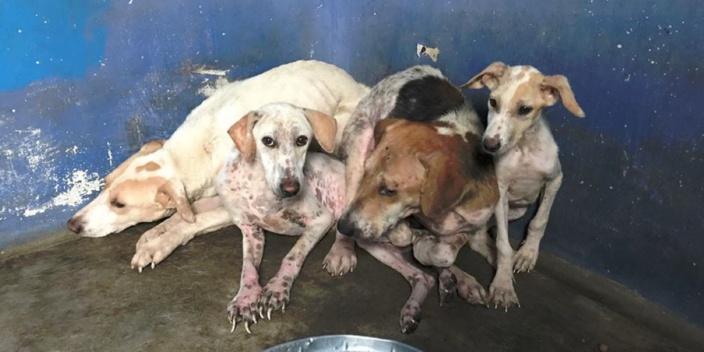 La Fondation Brigitte Bardot en guerre contre la maltraitance animale à l'île Maurice