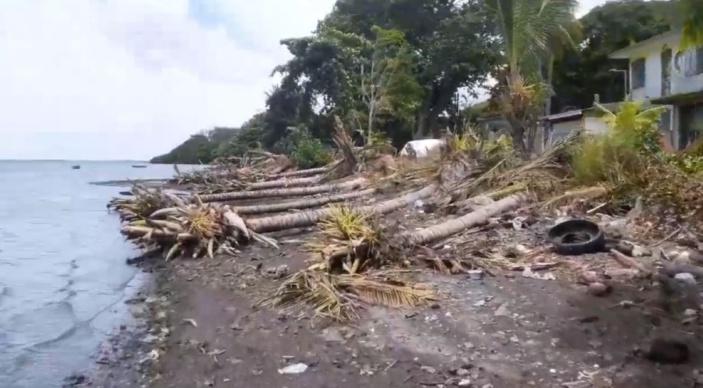 [Vidéo] Massacre à la tronçonneuse à Providence : des dizaines d'arbres sauvagement coupés sur le front de mer