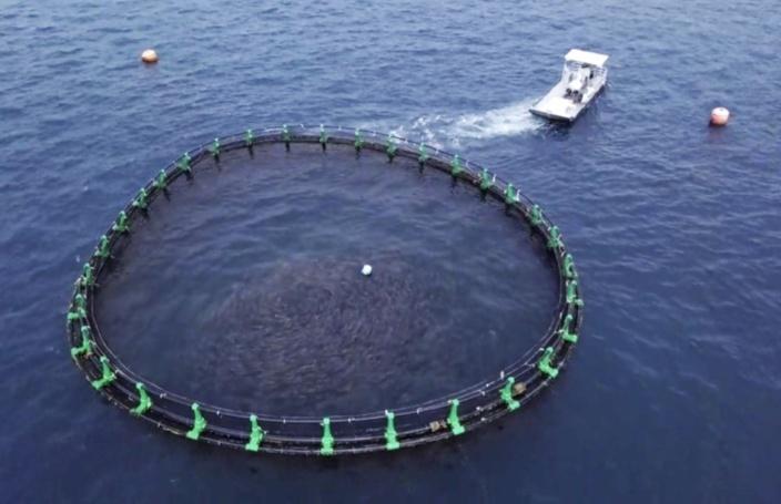 Bambous: le projet d'aquaculture de Growfish ne verra pas le jour
