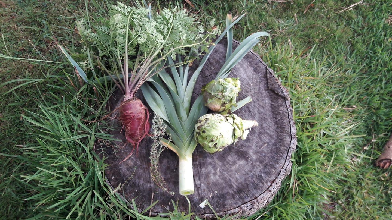 Cadeau de Mère Nature :Carotte, thym, poireau et deux mini choux.