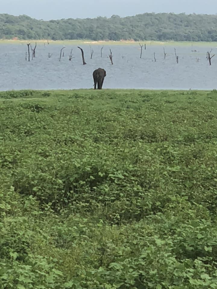 Kaudulla National Park.