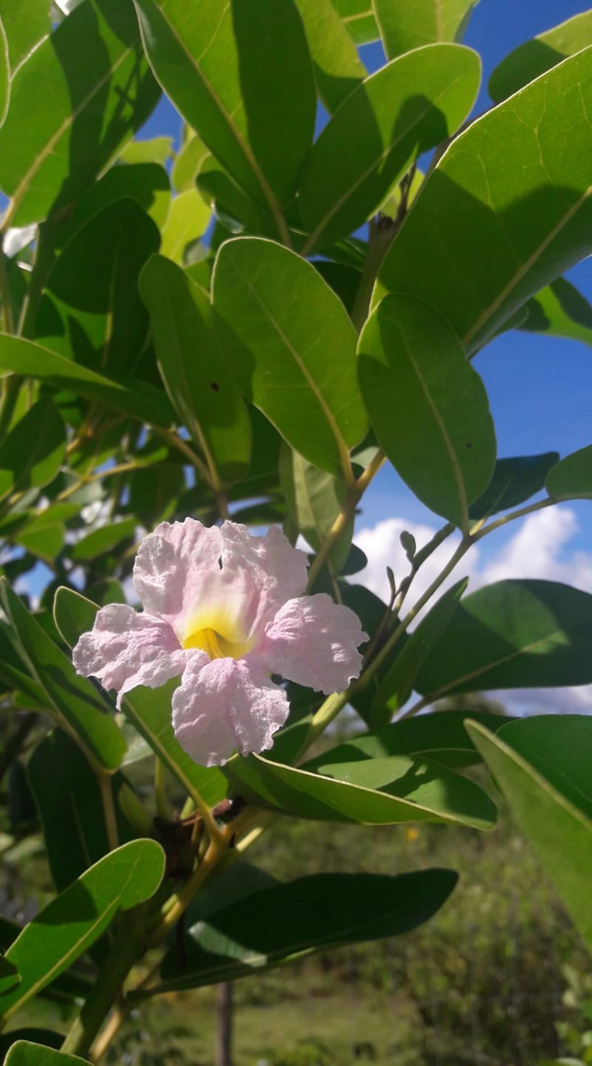 [Gael Soupe] L'été et les floraisons