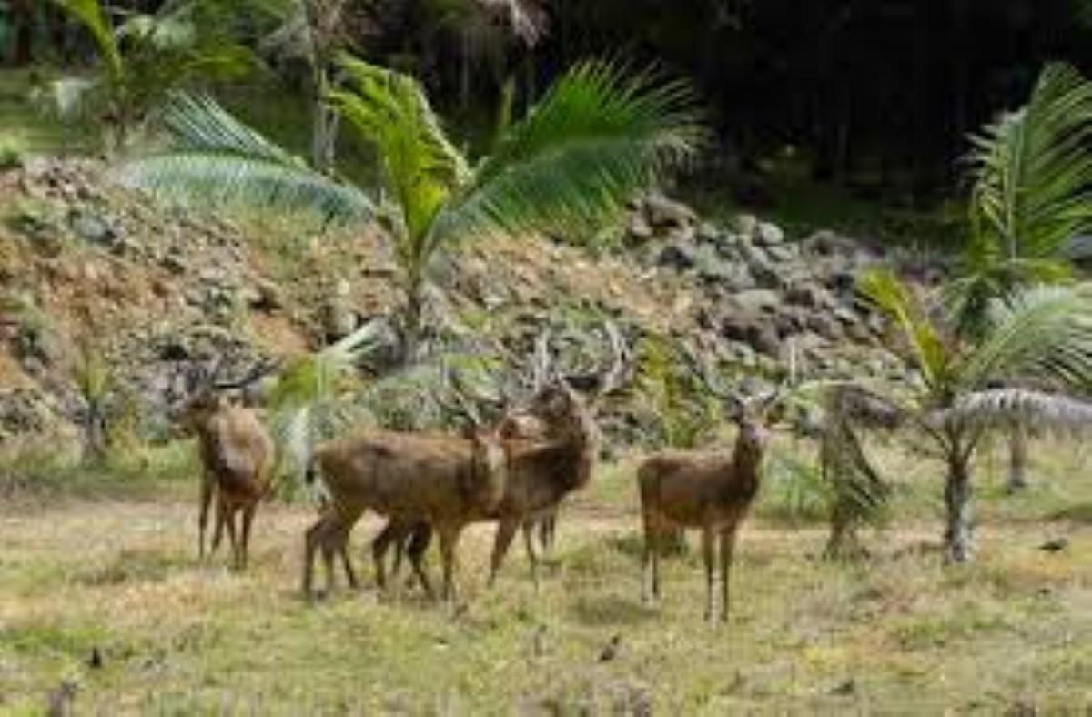 Le propriétaire d'une ferme au Domaine Ylang-Ylang reconnu coupable pour homicide involontaire