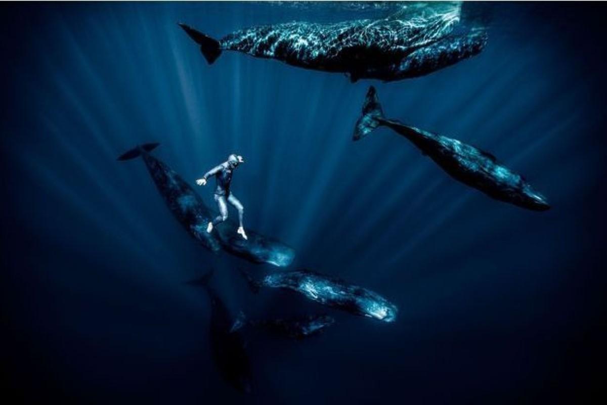 Marche aquatique avec les cachalots à l'île Maurice. Franck Seguin