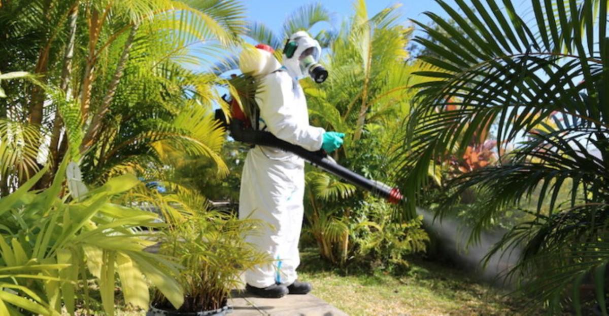 Le ministère en état d'alerte maximale concernant la dengue