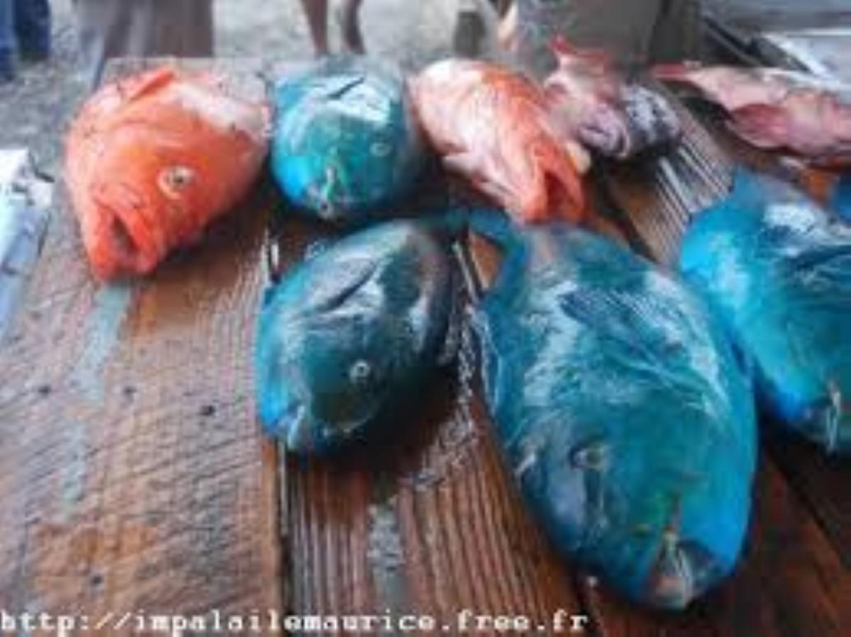 Hausse de la production de poisson