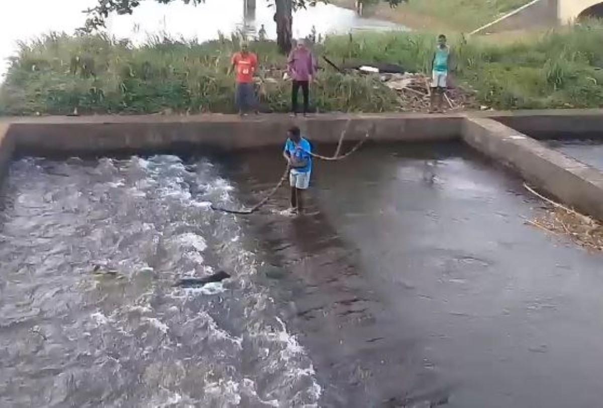[Vidéo] Sauvetage d'un chien à la Nicolière