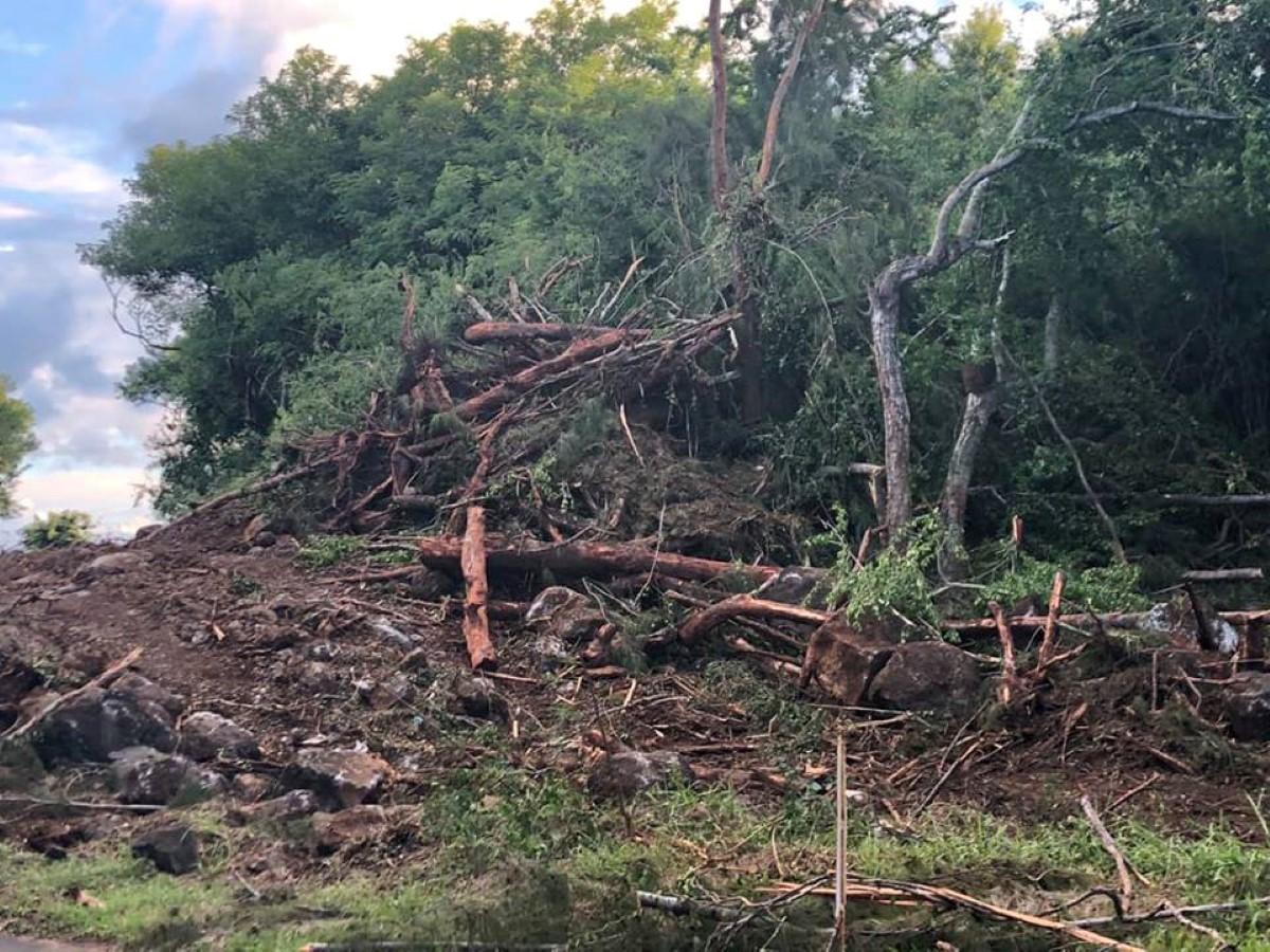 """[Vidéo] Projet """"by-pass"""" : Le massacre des arbres à Anse-la-raie a commencé"""