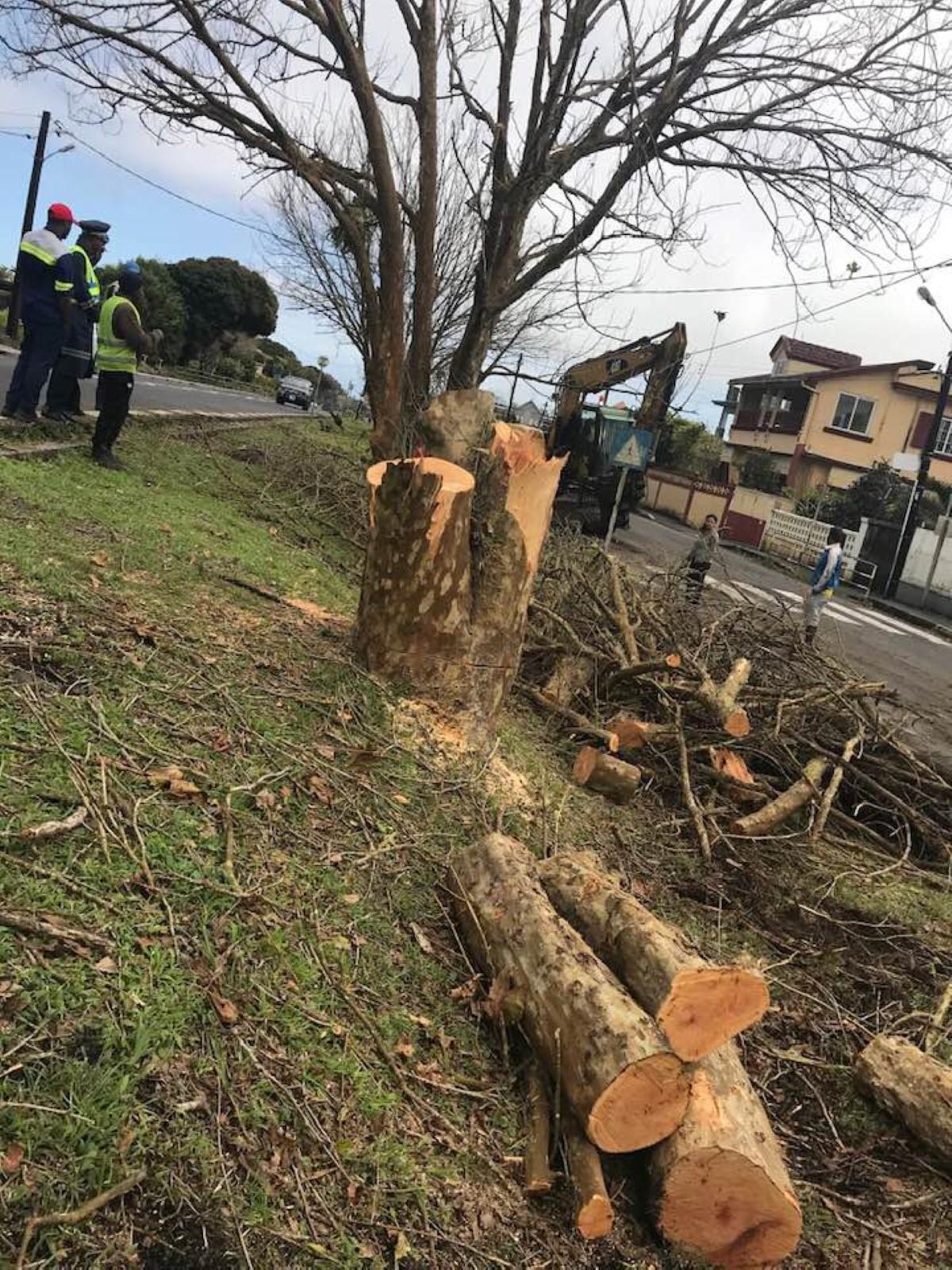 ▶️ Curepipe/Floréal : Massacre à la tronçonneuse d'arbres centenaires !