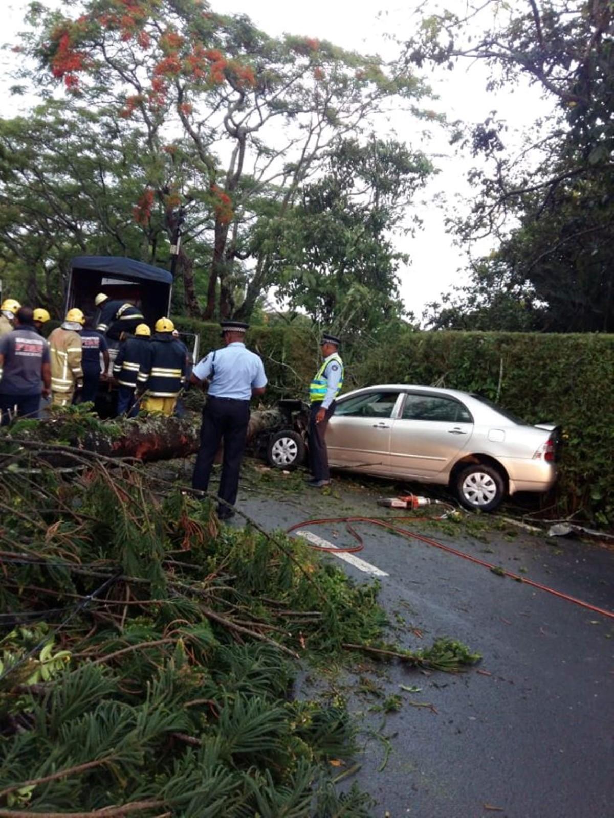 Un arbre chute sur une voiture : des dégâts, pas de blessés