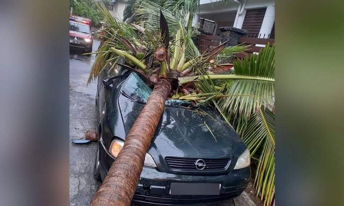 Trou-aux-Biches : Une voiture neuve se retrouve avec un cocotier sur le toit