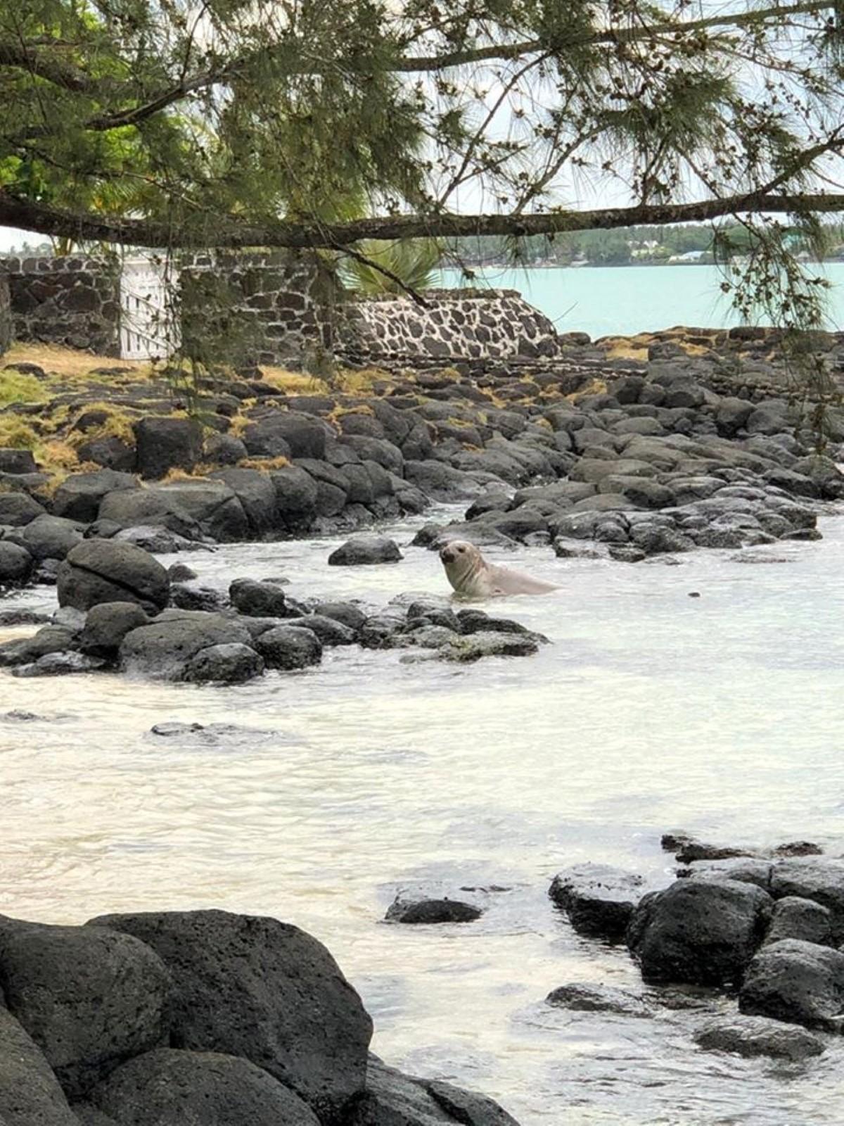 """Reef Conservation : """"L'éléphant de mer du Sud est en train de muer"""""""