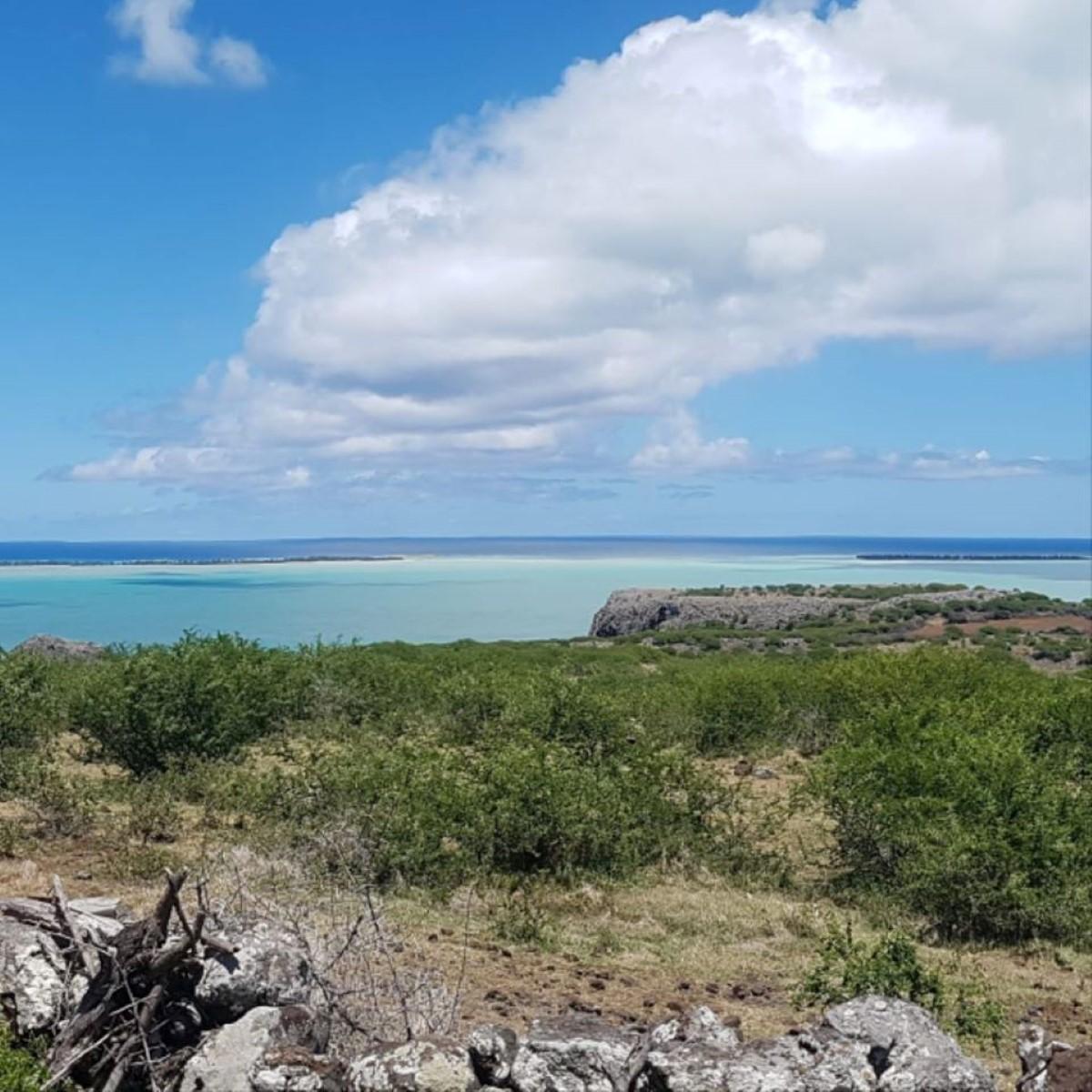 Rodrigues île durable : les fleurs en plastique bientôt interdites