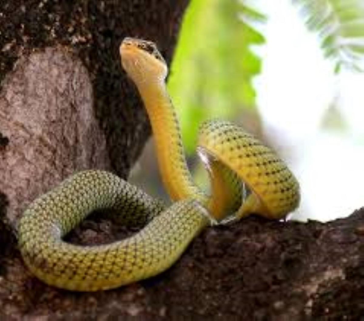 Un serpent se balade en liberté dans les rues de Quatre-Bornes