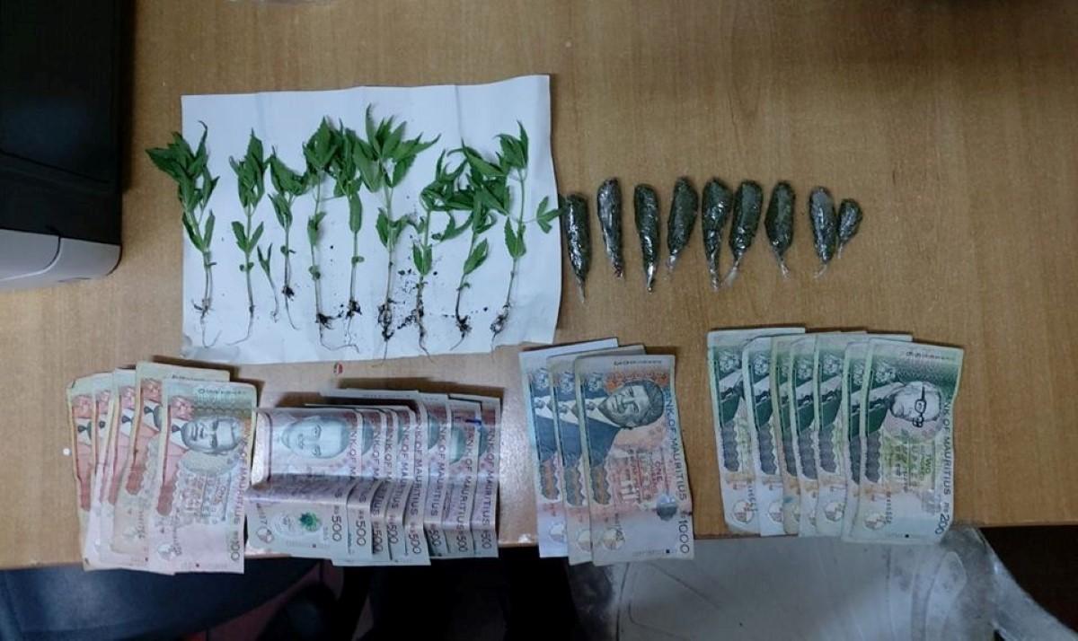 A Plaine Verte : un homme arrêté avec de la drogue et des plants de cannabis