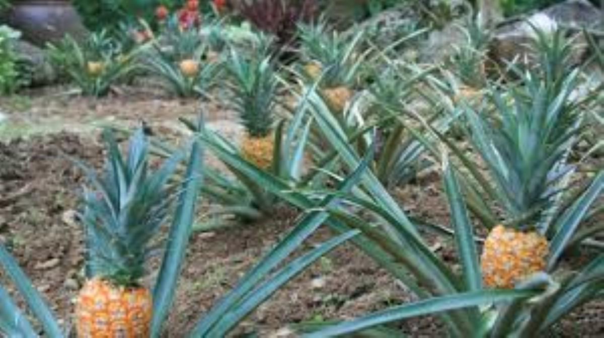 Confinement : Des fruits qui ne portent pas chance