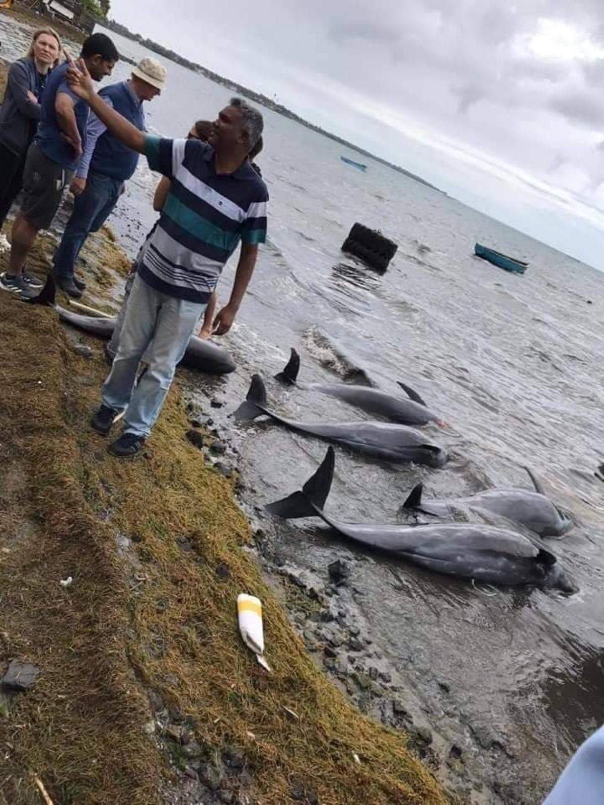 Mammifères marins morts à Maurice : Les conclusions hâtives des ONG locaux font tiquer