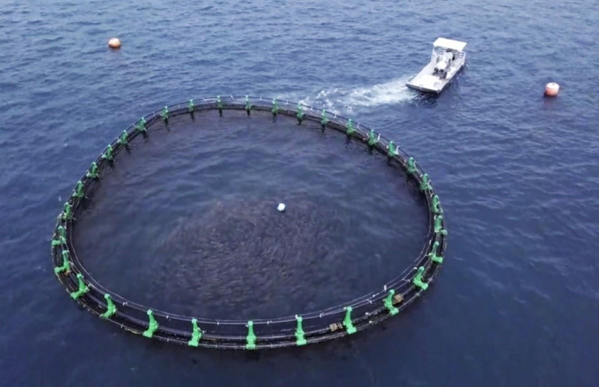 Marée noire: Pourquoi la Ferme Marine de Mahebourg (FMM) n'est-elle  pas soumise à une interdiction de vente?