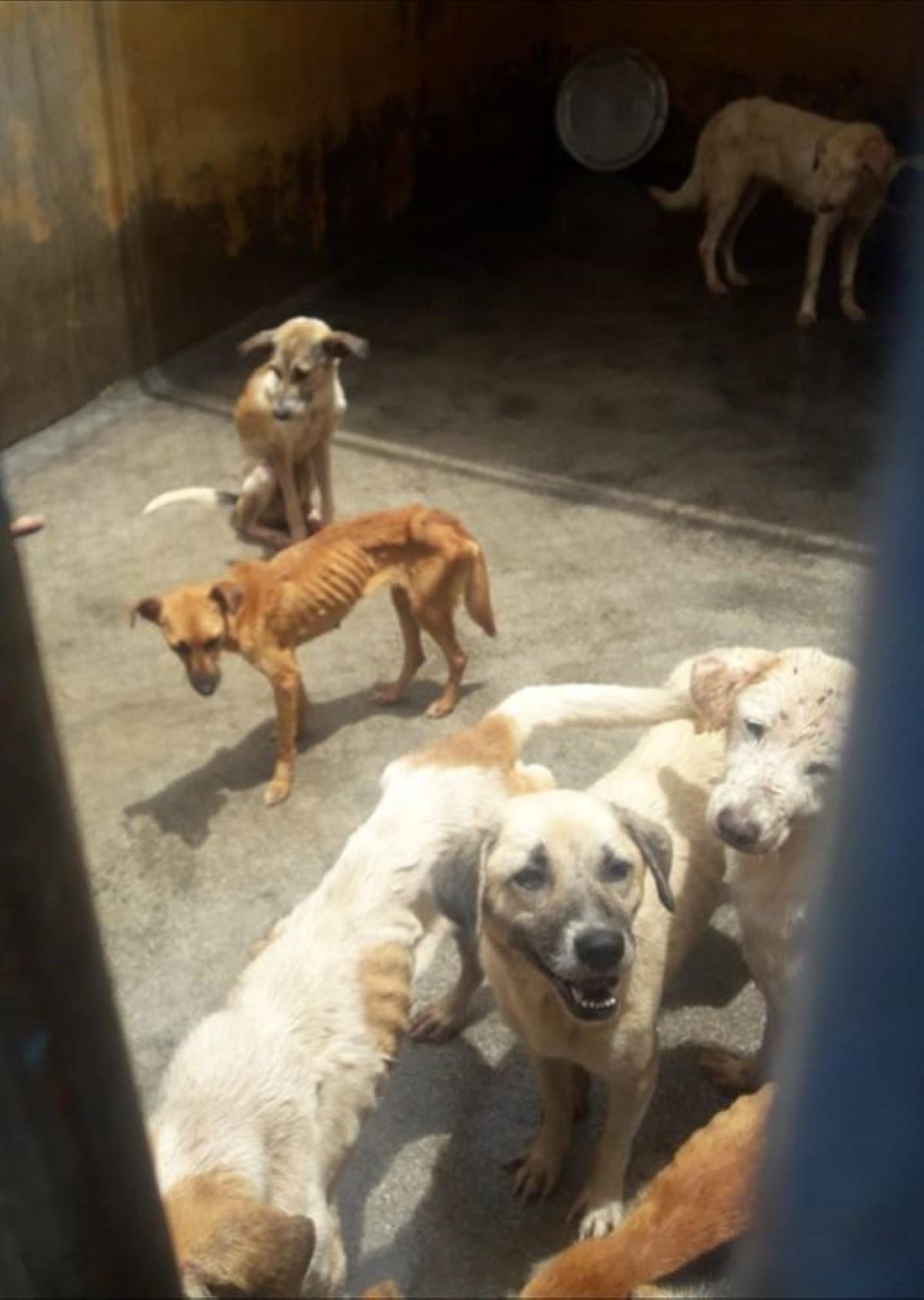 Maltraitance animale : Joanna Bérenger s'émeut pour 23 chiens placés à la Mauritius Society for Animal Welfare