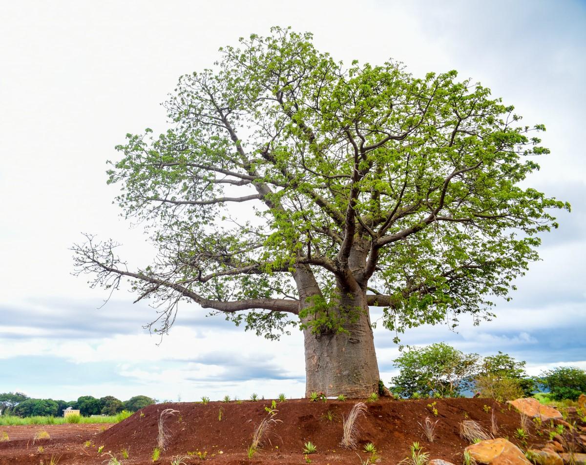 """Pravind Jugnauth:  """"Nou pe continuer développement dans respect nou l'environnement"""""""