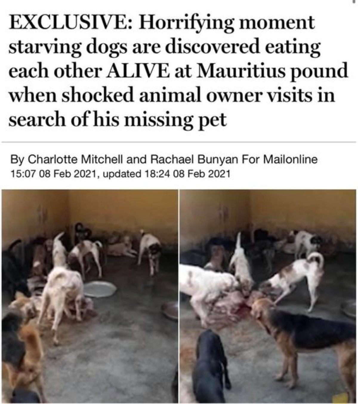 Humane Society International Mauritius envoie une vidéo au Daily Mail, de chiens affamés de la MSAW