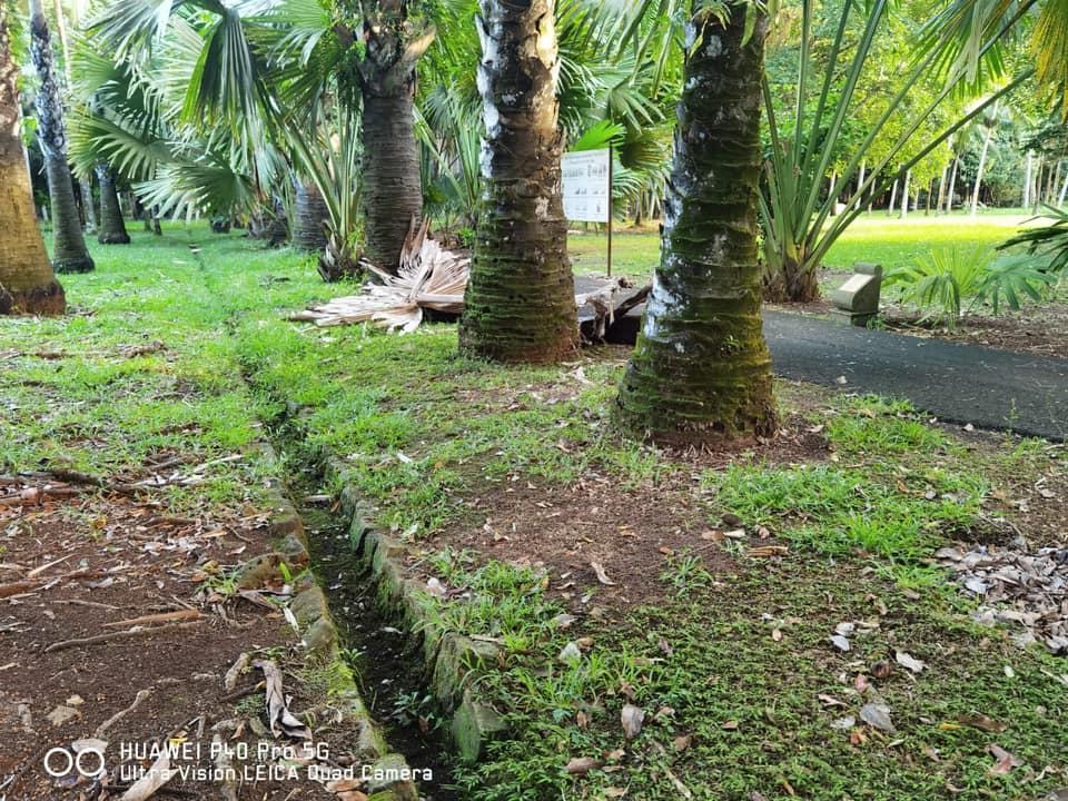 Pamplemousses : le plus beau jardin botanique de l'ile Maurice en péril